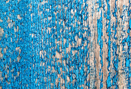 surface aged: Cracked blue paint texture peeling off of the surface of aged and worn wood. Copy space area fo grunge text designs and concepts.