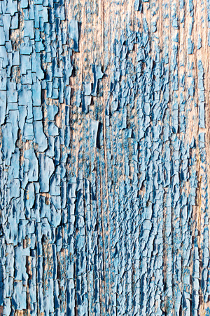 flaking: Old flaking blue paint texture with close up details of the wood grain and peeling flakes