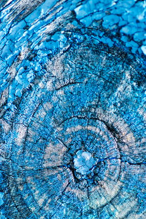 decrepit: Flaking blue paint texture on aged decrepit wooden background with details of a large wooden knot in the wood material