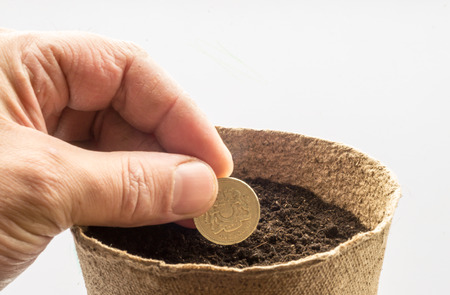 sows: Male hand sows a golden coloured English pound coin in a pot of compost to make the money grow as a finance concept. Stock Photo