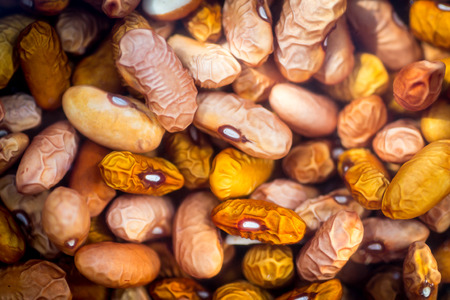 soak: Dried orange coloured beans absorb water as they soak overnight to rehydrate. Food background.