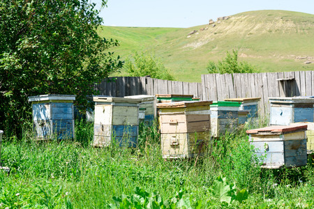 vibrant colours: Wooden beehives and painted vibrant colours used by bees as a home colony for honey production