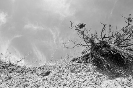 ravaged: Crumbling sea front beach cliff due to erosion fro the sea with a single tree ravaged by the endless water.