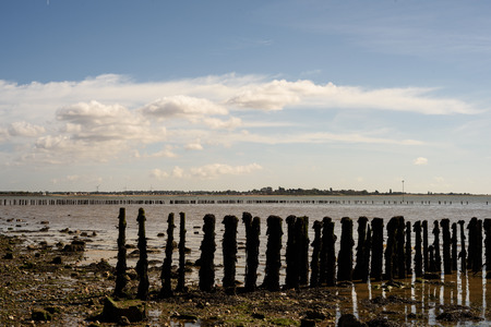 Aged and seaworn wooden sea barrier posts at low tide on Cudmore Grove East Mersea Island in Essex Engand