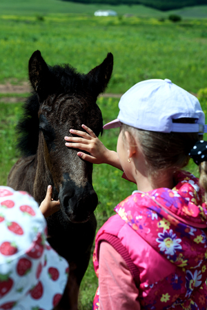 Young girl in summer stroked the head of a young foal horse in natural sunlight