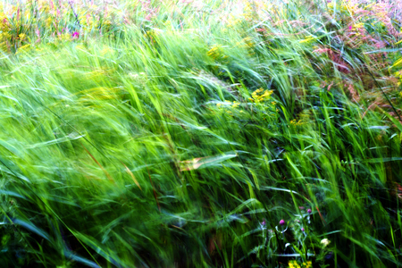 Green weeds and grass stalks blown in the wind with intentional motion blur using slow shutter speed Stock Photo