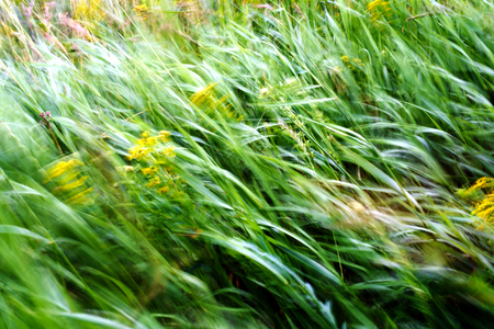 Green stalks of grass and weeds moving in the wind with intentional motion blur with slow shutter speed