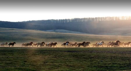 Wild horses galloping though dust and sunset creating a silhouette effect in sunlight with motion and blur and bright sunshine