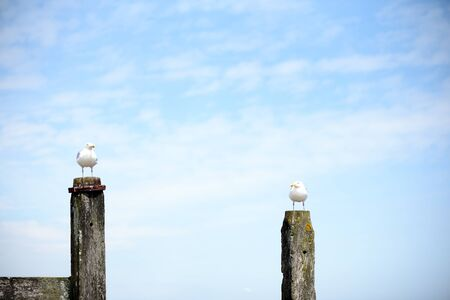 Two seagulls sitting on wooden posts in a summertime costal background with copyspace area for nature nautical sea based design and concepts