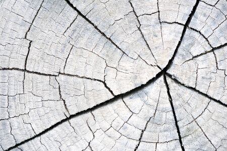 Black and white cracked tree trunk cross section in aged colours with vintage styling