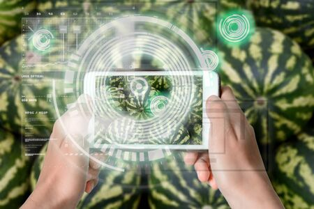 Augmented Reality device using smart technology, mixing virtual and augmentation reality through the application of artificial intelligence and computer AI tech assistance for choosing best fruit watermelons