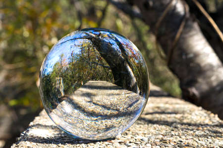 Reflection of the trees in the forest in a glass ball Reklamní fotografie