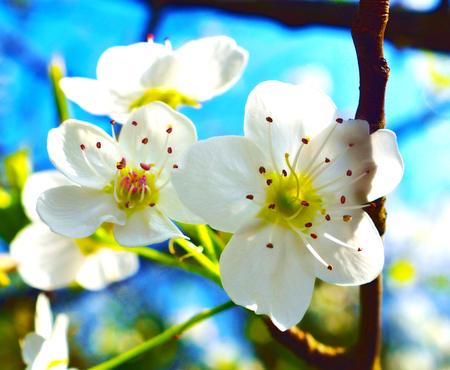 Wild Tree Flower