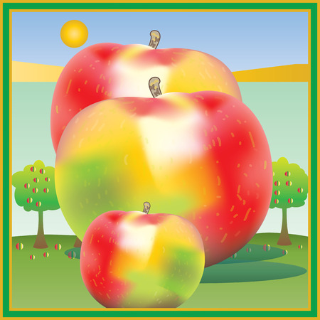 harvest time: Apple harvest time, giant fruit.