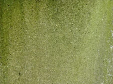 dirty green mossy worn wall with dirt drips Stock Photo - 7117802