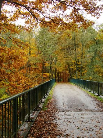 bridge over water: bridge over water in an autumn forest