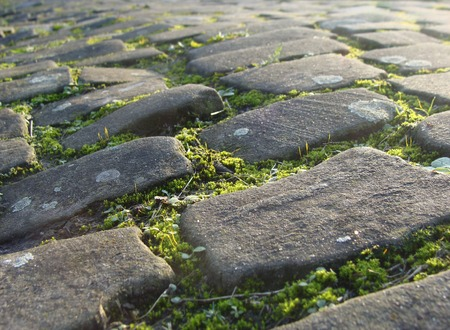 cobble: old cobble stone road with moss and evening low sun