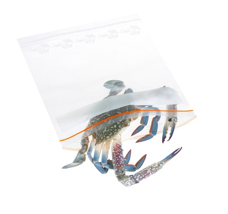 Keep your seafood longer life and fresh by putting in the refrigerator and zipper bag Stock Photo - 15669134
