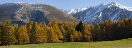 warmly: Beautiful autumn panoramic view in New Zealand on a sunny warmly day with mountain valleys and pine forests