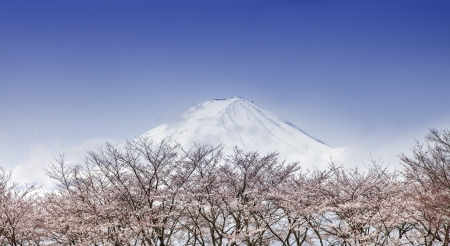 Mount fuji and pink cherry blossom trees in spring, Japan photo
