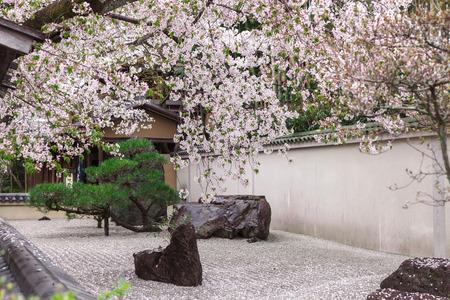 Zen-tuin Japanse stijl siert door roze kersenbloesem in het voorjaar, Arashiyama Kyoto Japan