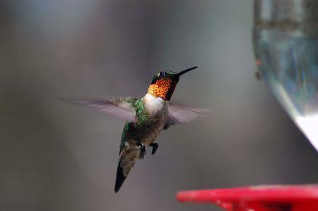 Hummingbird at the feede