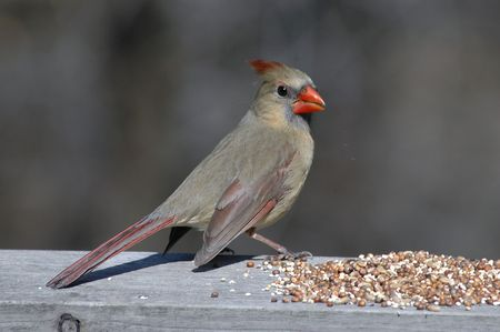 feeder: Bird at the feeder Stock Photo