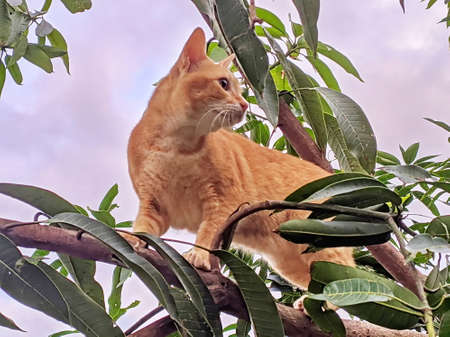 a pet cat is being released playing in the tree with pleasure