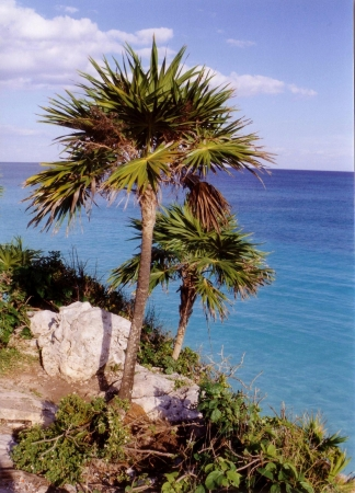 scanned from my photo of palm trees at Tulum Mexico
