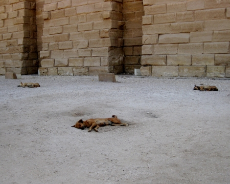 lazy dogs languishing in heat