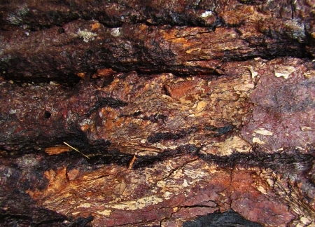 Detail of wet tree bark