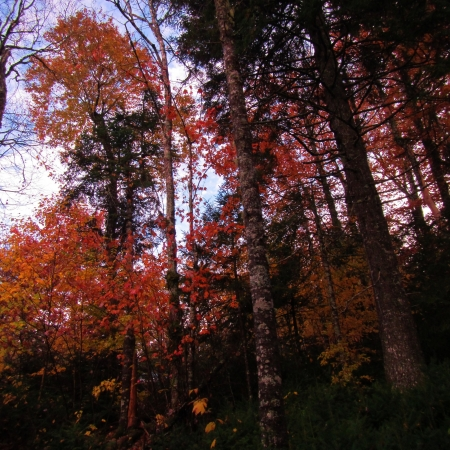 Inside the forest in Autumn