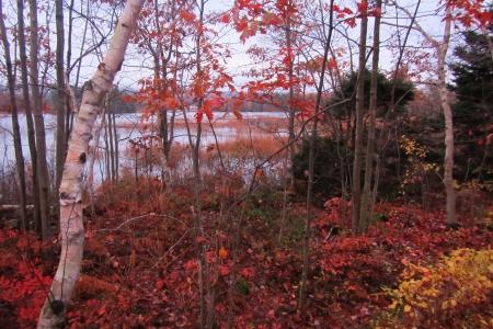 Lake banook as seen through the trees