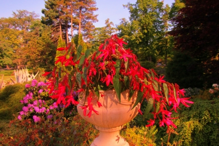 Beautiful potted flowers in Halifax Public Gardens in Nova Scotia Canada