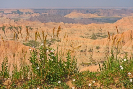Unique view of the South Dakota Badlands with some beautiful wild flowers in the froeground  Stock Photo