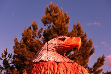 Wood carving of American Bald Eagle with beautiful pine tree Stock fotó