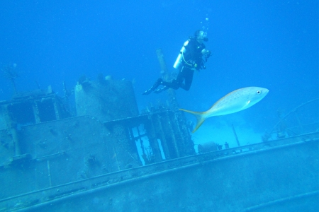 ship wreck: Scuba diver and fish wiht ship wreck in the background