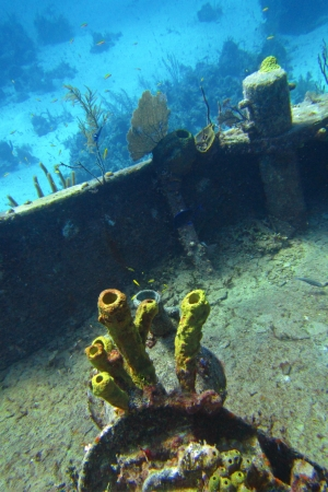Coral growing on top deck of a ship wreck  Stock Photo - 23114663