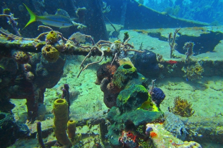 Coral growing on top deck of a ship wreck  photo