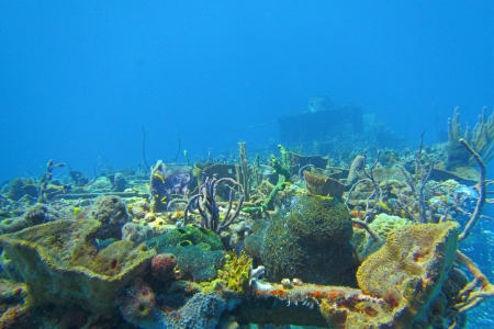 hard coral: Coral growing on top deck of a ship wreck