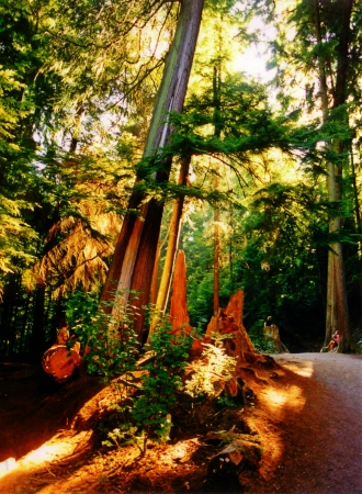 Beautiful rainforest photograph with dappled sunlight coming through the trees