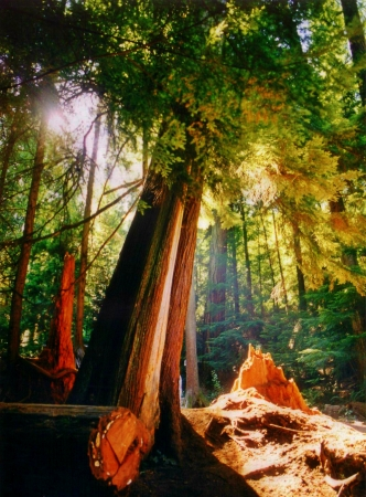 photograph I shot in the West Coast Rainforest of North America  photo