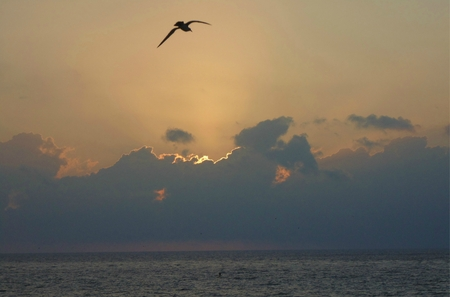 Sunrise over the Carribean with a bird in flight  photo