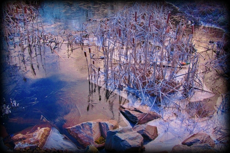 winter blues: Thin layer ice formed on pond with rocks and cat of nine tails