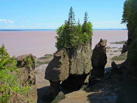 Looking down on flower pot rock formations at the Bay of Fundy during low tide