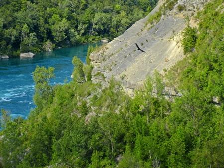 bird of prey: Bird of prey swooping through the Niagara Falls gorge