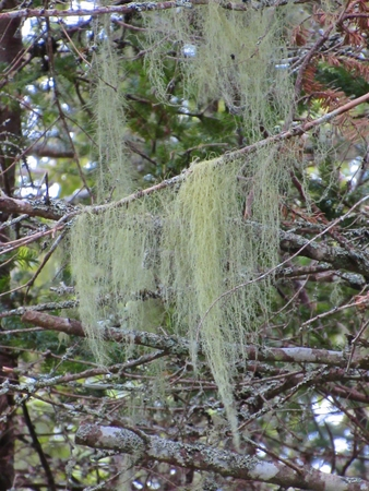 scotia: Moss on tree in Nova Scotia