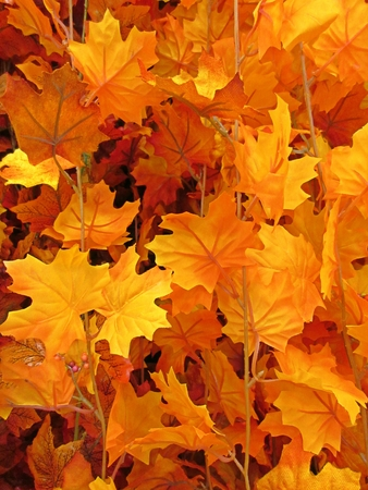 assemblage: Assemblage of Fall foliage