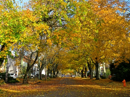 strret: City street covered in fall leaves.