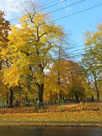 nova: Camp Hill Cemetery at Halifax Nova Scotia in the Fall. Stock Photo
